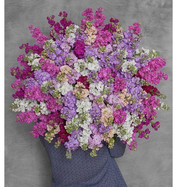 Букет 101 разноцветная маттиола, изображение 1