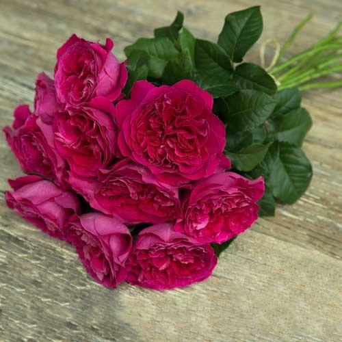 """Букет роз от Дэвида Остина """"Кэйт"""" - фото 1"""