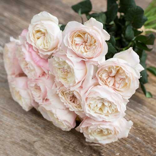 """Букет роз от Дэвида Остина """"Кейра"""" - фото 1"""