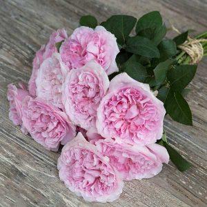"""Букет роз от Дэвида Остина """"Миранда"""" - фото 1"""