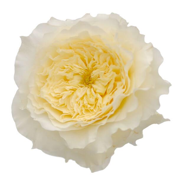 """Букет роз от Дэвида Остина """"Патинс"""" - фото 2"""