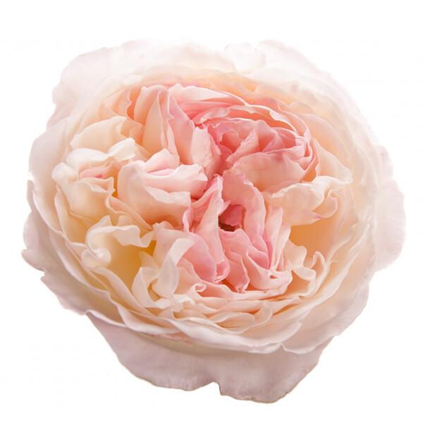 """Букет роз от Дэвида Остина """"Кейра"""" - фото 2"""
