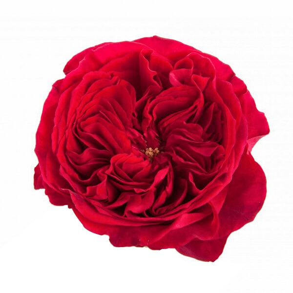 """Букет роз от Дэвида Остина """"Тесс"""" - фото 2"""