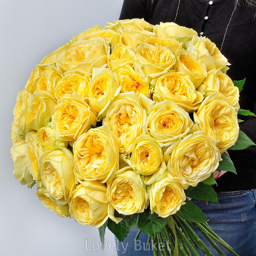 """Букет Садовая пионовидная роза """"Catalina"""", изображение 1"""