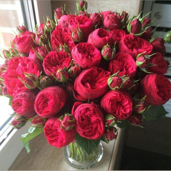 Букет английских красных пионовидных роз - фото 2