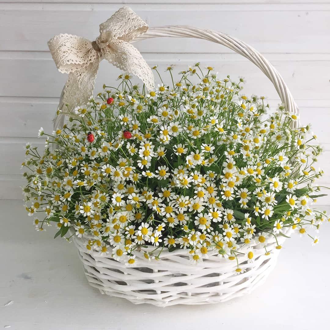 Друзьям свадьбу, цветы доставка москва полевые цены