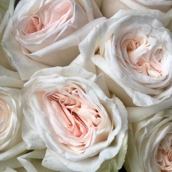 Букет ароматных пионовидных роз - фото 2