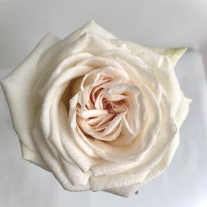 Ароматная роза сорта Ohara в корзине - фото 3