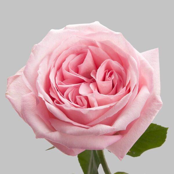 """Ароматные розы в коробке """"Fantastic"""" - фото 3"""