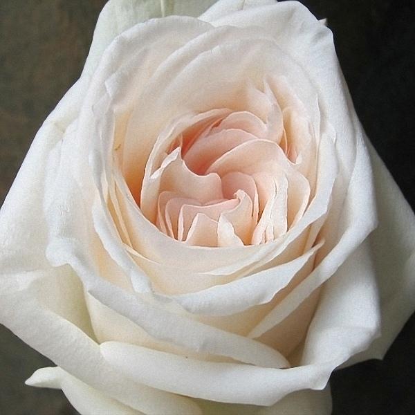 """Ароматные розы в коробке """"Fantastic"""" - фото 2"""